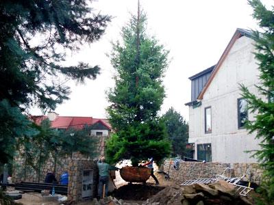 duze-drzewa-jakub-gardner-ogrody-projekty-ogrodow-krakow-galeria-ogrod-minimalny