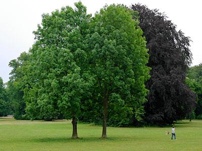 duze-drzewa3-jakub-gardner-ogrody-projekty-ogrodow-krakow-galeria-ogrod-minimalny